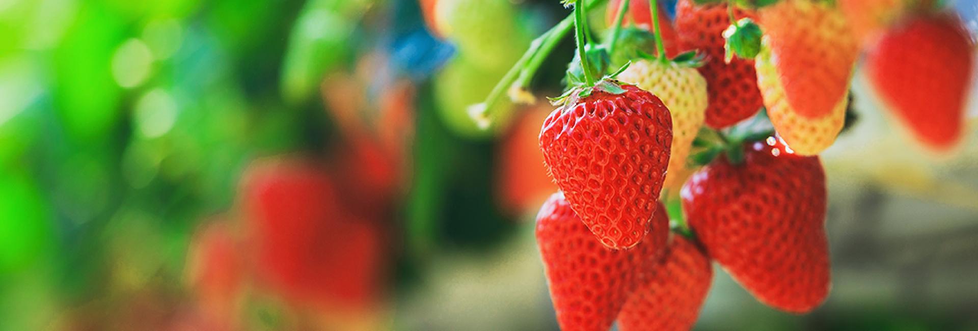 産地から流通までに多岐に渡り青果物の価値向上に挑む!